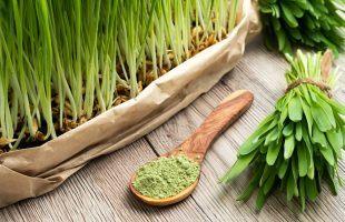 Hvedegræs – Hvad Er Det?