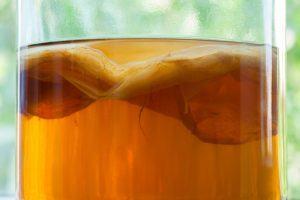 Kombucha - alt du skal vide om den fermenterede te