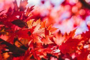 Gå efteråret i møde - Beskyt huden med 5 gode råd