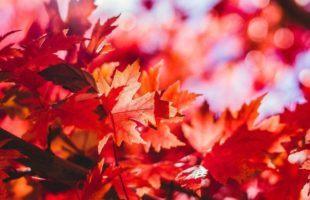 Gå Efteråret I Møde – Beskyt Huden Med 5 Gode Råd