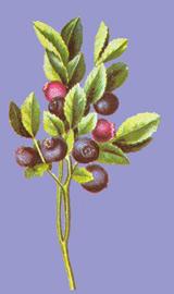 Natur Drogeriet Blåbærblade (1000 gr)