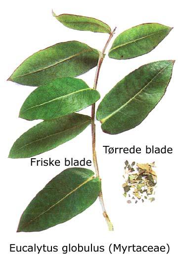 Natur Drogeriet Eukalyptusblade (1000 gr)
