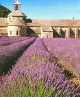 Natur Drogeriet Lavendelblomst Blå (1000 gr)