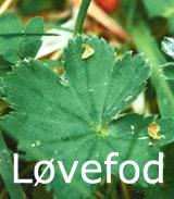 Natur Drogeriet Løvefod F1 (1000 gr)