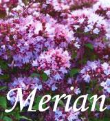 Natur Drogeriet Merian Have (1000 gr)