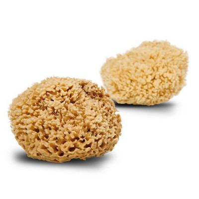 Cocoon Natursvamp Honey Wool 13-14 cm (1 stk)