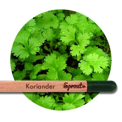 Sprout (Koriander)