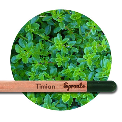 Sprout (Timian)
