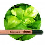 Sprout (Basilikum) - Blyanten der kan spire