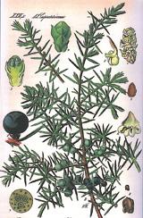 Natur Drogeriet Enebær Hele F2 (1000 gr)