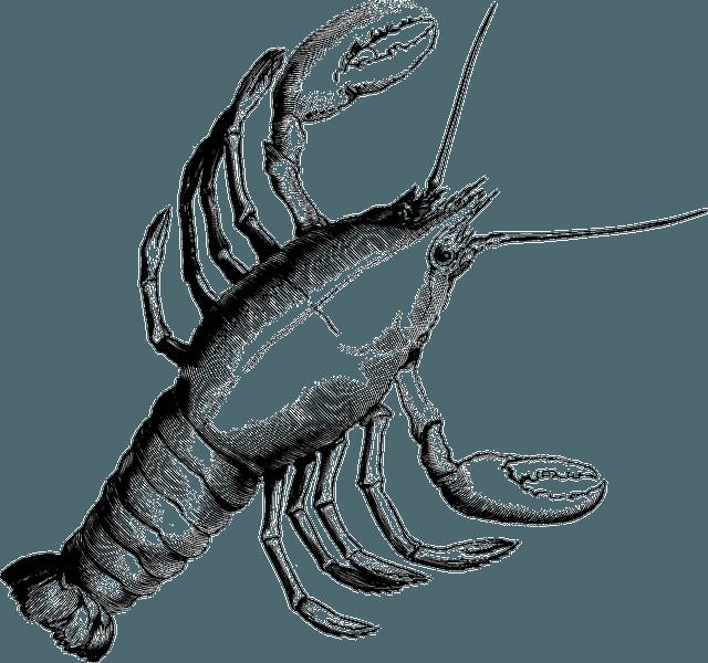 Glucosamin udvundet fra skaldyr